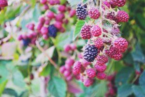 Stocksnap berries