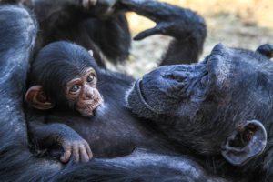 monkey-mama