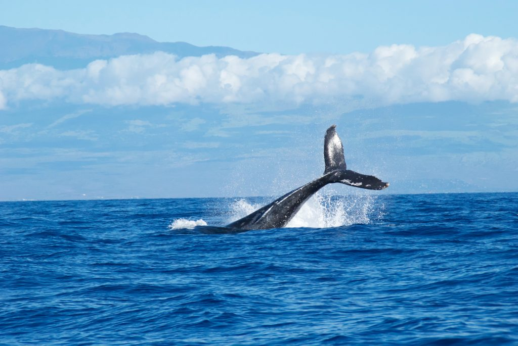 Whale Moment