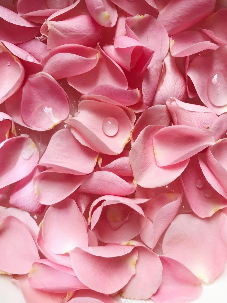 rose petals path